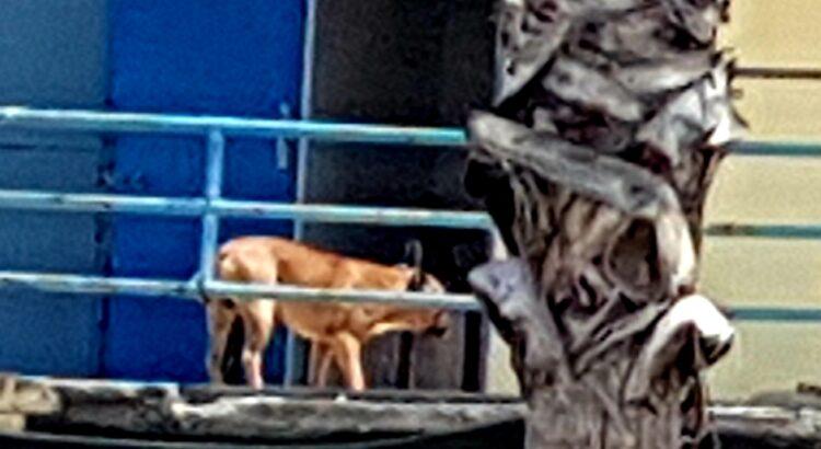 Lido Comunale Reggio Calabria, Nuccio Pizzimenti: Cani chiusi nelle cabine, vanno liberati con urgenza. 8